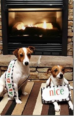Our dogs- cover for our Christmas card last year. Maybe someone can use this idea for their cards as well.