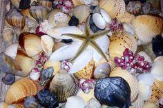 shells from the Texas gulf coast...