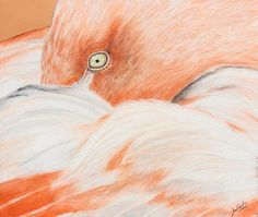Title  Pink Flamingo  Artist  Jeanne Fischer  Medium  Painting - Oil Pastel And Colored Pencil On Paper