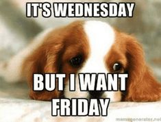Humpday Humor Discover 25 Funny Wednesday Memes & Quotes To Get You Through The Rest Of The Week They dont call it Hump Day for nothing. Funny Hump Day Memes, Funny Wednesday Quotes, Wednesday Morning Quotes, Hump Day Quotes, Wednesday Hump Day, Hump Day Humor, Wednesday Humor, Good Morning Quotes, Funny Quotes