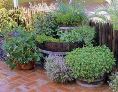35 Herb Container Garden Ideas