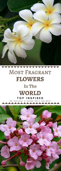 Everyone has their preferences, but to us these 10 are the most popular and pleasant smelling. Check them out and feel free to add your favorites in the comments section.