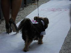 Wil je je hond bij je trouwerij hebben? Gebruik hem als ringdrager in een smoking outfitje!