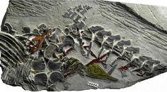 Les petits dinosaures marins se distinguent très bien sur le fossile.