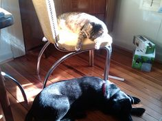 Sharing a sunbeam by enrevanche