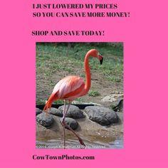 #Prints #Photos #Gift #Ideas #Home #Decor #Animals #Birds #Flamingos
