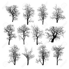 Dead Tree Without Leaves Vector Illustration Sketched, EPS 10 Royalty Free Cliparts, Vectors, And Stock Illustration. Pic 23974242.