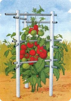 Gardening Tomatoes Homemade Tomato Cages Indestructible Tomato Cage - Who needs store-bought tomato cages? You can build your own sturdy, low-cost tomato cages and trellises with these four terrific designs. Garden Yard Ideas, Lawn And Garden, Garden Projects, Pvc Projects, Big Garden, Garden Hose, Organic Gardening, Gardening Tips, Hydroponic Gardening