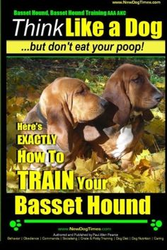 Basset Hound, Basset Hound Training AAA AKC: Think Like a Dog, But Don't Eat Your Poop! Basset Hound Breed Expert Training: Here's EXACTLY How To TRAIN Your Basset Hound (Volume 1)