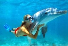 Swim with dolphins and snorkling