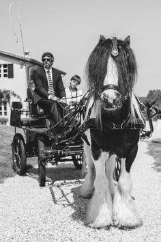 attachi # irish cob stallion # allevamento irish cob cà bianca dell'abbadessa #