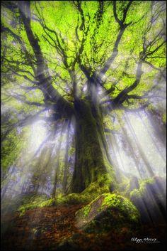 Light streams through a lovely tree....