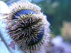 Sea Urchins in the Saltwater Tank | RateMyFishTank.com