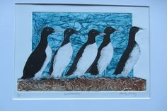 Guillemots a drypoint/collagraph by Lindy Furby