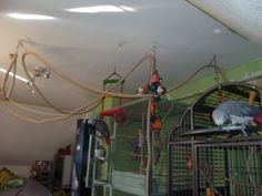 Parrot playground made with rope from the ceiling