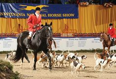 Don't Miss Hunt Night at the 70th PA National Horse Show!  Hunt Night: 6:30 pm Monday - Oct. 12 2015 -Field Hunter Riders 35 & Under -Field Hunter Riders over 35 Parade of Hounds -Gentlemans Hunter Under Saddle -Ladies Hunter Under Saddle -Leading Lady Rider Award -Hunt Teams -Hunt Night Championship #PNHSHuntNight