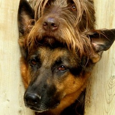 dogs.....CUTE