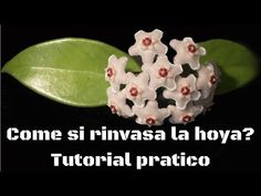 Amazing Nature, Diy And Crafts, Flowers, Plants, Computer, Tutorial, Terracotta, Youtube, Gardening