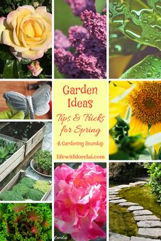 Gardening is a fun and productive way to de-stress. Discover wonderful garden ideas and tips to plant, maintain, decorate, and beautify your gardens. Back Gardens, Small Gardens, Gardening For Beginners, Gardening Tips, Spring Garden, Home And Garden, Pergola Pictures, Lawn Edging, Garden Care