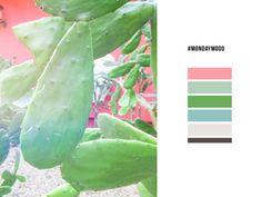 #mondaymood | Cactus