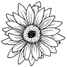 Flower Drawing Drawing Blooming Aster Flower Coloring Pages Colouring Pages, Adult Coloring Pages, Coloring Books, Sunflower Coloring Pages, Doodle Drawing, Daisy Drawing, Aster Flower, Gerbera Flower, Daisy Flowers