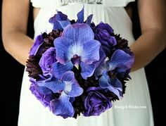 Purple Orchid Collection
