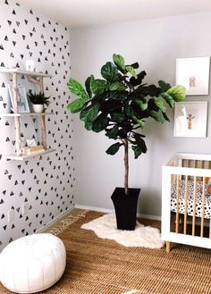 Newborn. Nursery inspo. Nursery inspiration. Pottery barn. Land of Nod. Crate and Barrel. Modern nursery ideas. Gender neutral nursery. Babyletto mid-century crib. Baby registry. Fiddle leaf fig. Design inspiration. Muslin blanket. Newborn photos. Moses basket. Black and white nursery. Removable wallpaper. Nursery wallpaper inspiration. Boys nursery wallpaper. Jute area rug. #babiesnursery