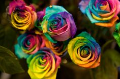 yes rainbow roses are a real thing, i just think this pic is cool, could print and frame in white and have as party decor next to a framed menu