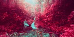 Yes, These Are Real (Infrared) Photos