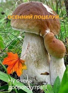 1 непрочитанный чат Good Morning, Nature Photography, Flowers, Animals, Fungi, Autumn, Live, Quotation, Good Morning Funny