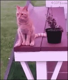 He thinks he's people. [video] (gif) silly cat - I guess when you're comfortable... you're comfortable