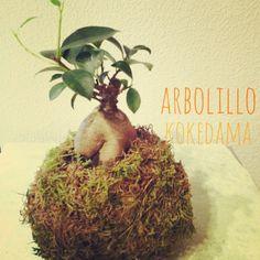 #kokedama #bonsai http://espaciosvivos.es/kokedamas-madrid/
