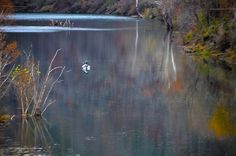 A picture of a guy fishing in Eureka Springs Arkansas.  Picture by David Daugherty
