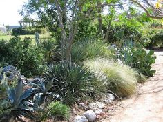 Good article on xeriscaping in Fort Worth, and I really like this look.