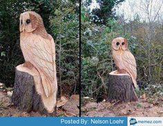 Cottonwood Bark Carving Patterns - Bing Images