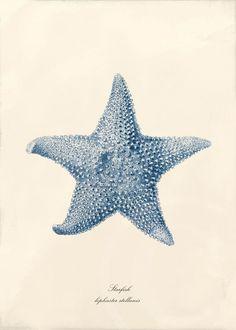 Blue Coral Art Print 5 x 7 Lophaster Stellanis by 1001treasures, $10.00