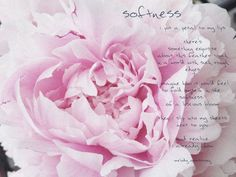 i put a petal to my lips something exquisite about this feather touch in a world with such rough edges i imagine how it would f. Feather Touch, Poetry, Lips, Rose, Flowers, Pink, Roses, Royal Icing Flowers, Poems