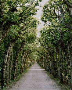 I Love Tree Lined Roads !!