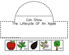Apple Lifecycle Crown PLUS Sequencing Cards are perfect for adding science to your literacy block!