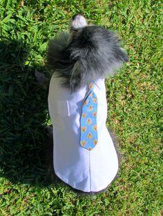 Small Dog's Executive Dress Shirt & Blue by BloomingtailsDogDuds, $23.95