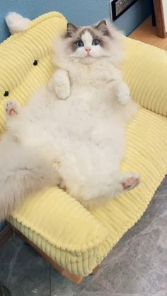Funny Cute Cats, Funny Kittens, Cute Cat Gif, Cute Cats And Kittens, Cute Funny Animals, Cool Cats, Kittens Cutest, Baby Cats, I Love Cats