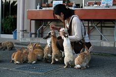 Rabbits – Okunoshima, Japan