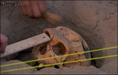 obi-wanker-nobi:  asolitaryfuck:deanprincesster:  adorkoftheworld:  tonyfromstatefarm:  me participating in a group project  WHY AM I LAUGHING SO HARD  looks like someone owes everyone an anthropology  Get out.   As an archaeologist I can confirm 100% this is how you excavate skulls