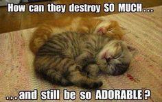 I want one... So cute ❤️