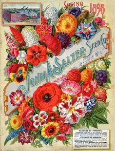 Beautiful Vintage Flower Seed Packet Design from John A. Salzer Seed Co. Spring 1898