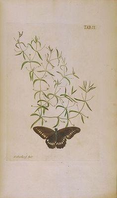Afbeeldingen van zeldzaame gewassen. Te Leyden : By Johannes le Mair, 1775