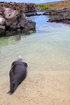 Sea Lion   GALAPAGOS ISLANDS Photo Gallery: San Cristobal, Kicker Rock www.greenglobaltravel.com