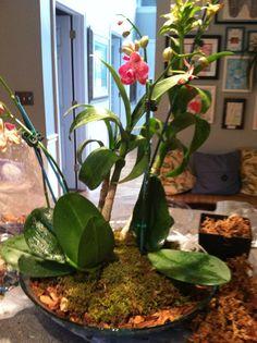 Orchid arrangement for buffet