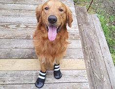 All Weather Neoprene Paw Protector Dog Boots with Reflect...