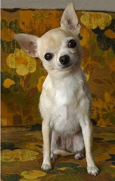 So Cute - Dogs Photo (13882789) - Fanpop